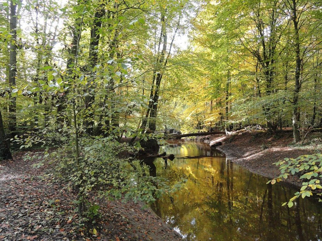 bekkendelle in Winterswijk Woold